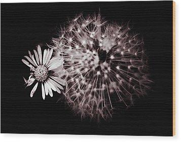 Dandelion And Daisy Wood Print by Grebo Gray