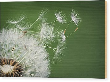 Wood Print featuring the photograph Dandelion Blowing by Bess Hamiti