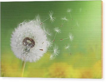 Wood Print featuring the photograph Dandelion Clock In Morning by Bess Hamiti