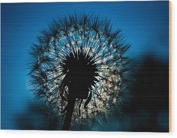 Dandelion Dream Wood Print by Jason Moynihan