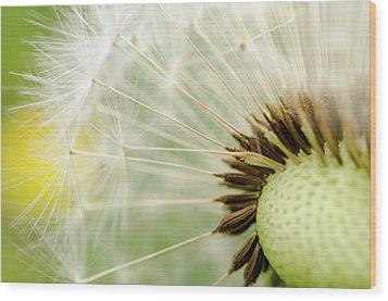 Dandelion Fluff Wood Print by Rainer Kersten