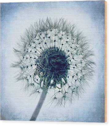 Dandelion In Blue Wood Print by Tamyra Ayles