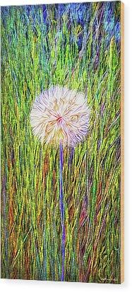Dandelion In Glory Wood Print by Joel Bruce Wallach