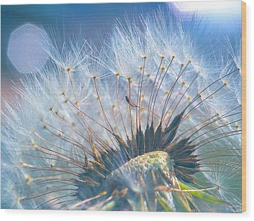Dandelion In Light Wood Print