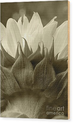 Wood Print featuring the photograph Dandelion In Sepia by Micah May