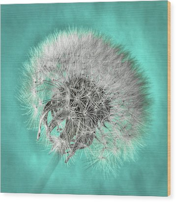 Dandelion In Turquoise Wood Print by Tamyra Ayles