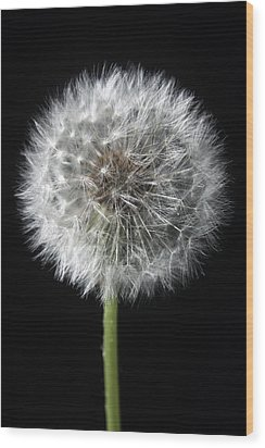 Dandelion Wood Print by Marc Huebner