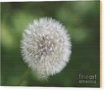 Dandelion - Poof Wood Print