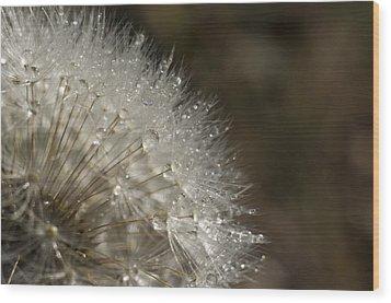 Dandelion Rain Wood Print