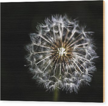 Wood Print featuring the photograph Dandelion Seed by Darcy Michaelchuk