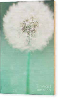 Dandelion Seed Wood Print by Kim Fearheiley