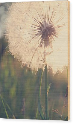 Dandelion Sunshine Wood Print
