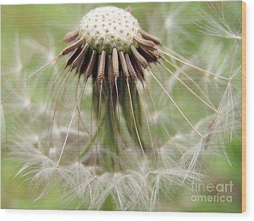 Dandelion Wish 8 Wood Print