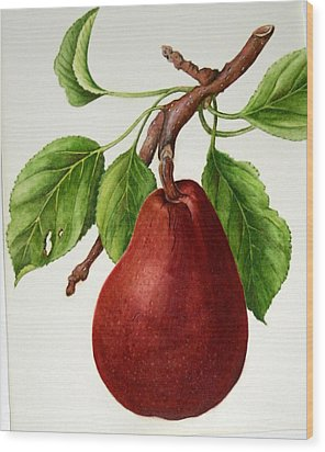 Wood Print featuring the painting D'anjou Pear by Margit Sampogna