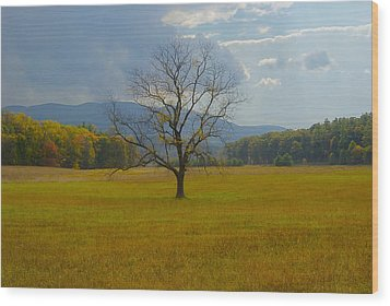 Dare To Stand Alone Wood Print by Michael Peychich