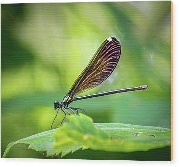Wood Print featuring the photograph Dark Damsel by Bill Pevlor