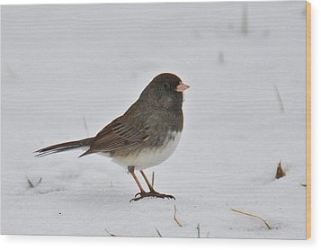 Wood Print featuring the photograph Dark-eyed Junco 1217 by Michael Peychich