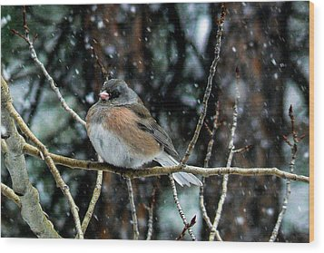 Dark-eyed Junco During A Snowfall Wood Print