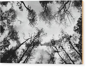 Dark Forest Wood Print by Janzgrossetkino