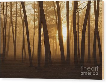 Dark Forest Wood Print by Terri Gostola