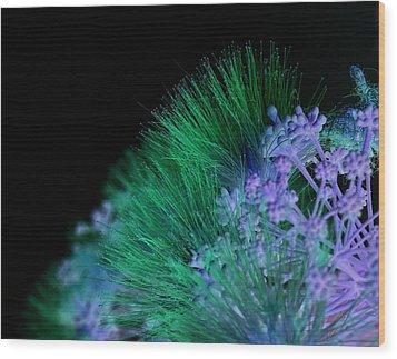 Dark Mimosa Wood Print by James Granberry