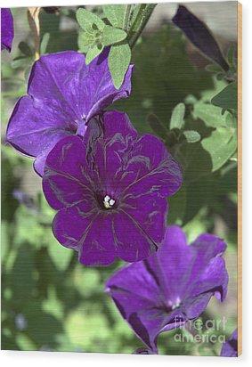 Dark Purple Petunias Wood Print