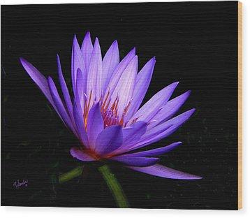 Dark Side Of The Purple Water Lily Wood Print