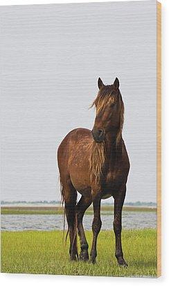 Dark Stallion Wood Print by Bob Decker
