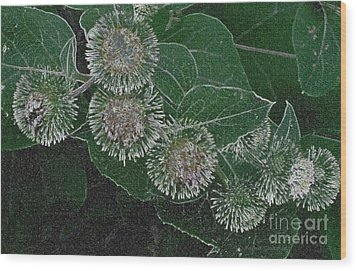 Dark Thistles Wood Print by Kathie Chicoine