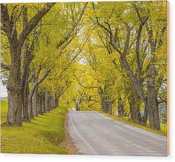 Darling Hill Autumn Wood Print by Tim Kirchoff