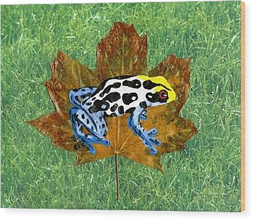 Dart Poison Frog Wood Print by Ralph Root