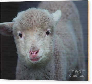 Dave The Sheep  Wood Print