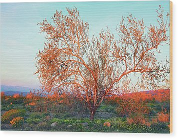 Wood Print featuring the photograph Dawn's First Light At Joshua Tree National Park by Ram Vasudev