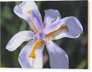 Day Lily 3 Wood Print