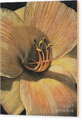 Day Lily Wood Print by Lawrence Supino