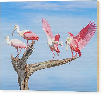 Day Of The Spoonbill  Wood Print by Mark Andrew Thomas