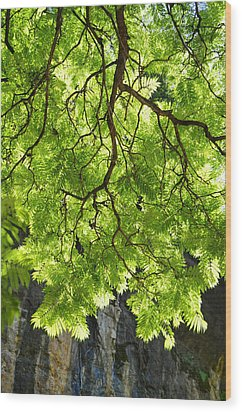 Daydream Wood Print by Skip Hunt