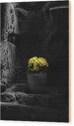 Wood Print featuring the photograph Daylight Delight by Tom Mc Nemar