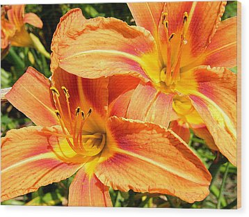 Daylillies In Bloom Wood Print by Margaret G Calenda