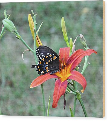 Daylily Delight 2 Wood Print by Jan Amiss Photography
