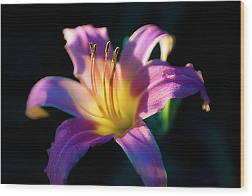 Daylily Glow Wood Print by Tamyra Ayles