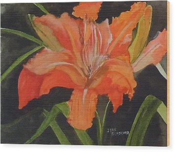 Daylily Study IIi Wood Print by Jean Blackmer
