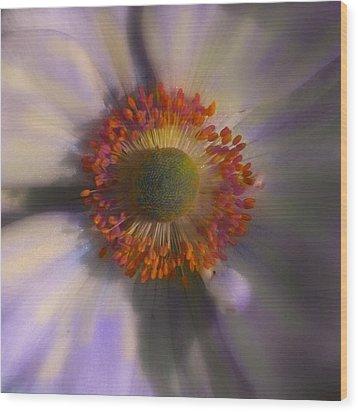 Dazie Eye Wood Print