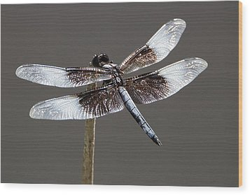 Dazzling Dragonfly Wood Print by Sheila Brown