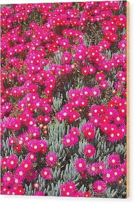Dazzling Pink Flowers Wood Print