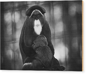 De Brazza's Monkey Wood Print