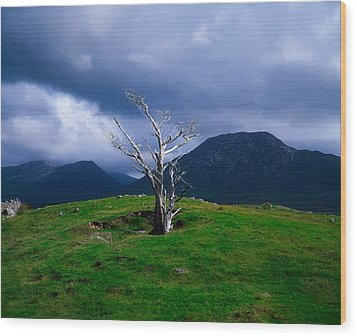Dead Tree, Connemara, Co Galway, Ireland Wood Print by The Irish Image Collection