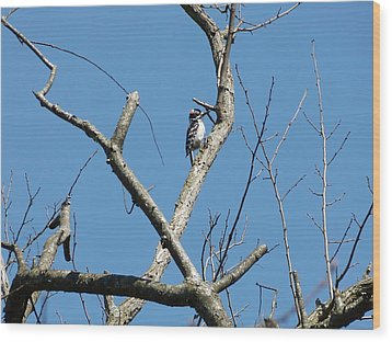 Wood Print featuring the photograph Dead Tree - Wildlife by Donald C Morgan
