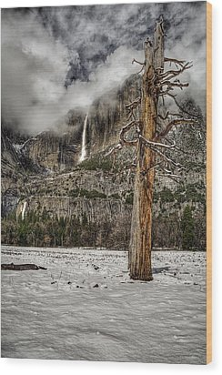 Dead Tree In Yosemite Valley Wood Print