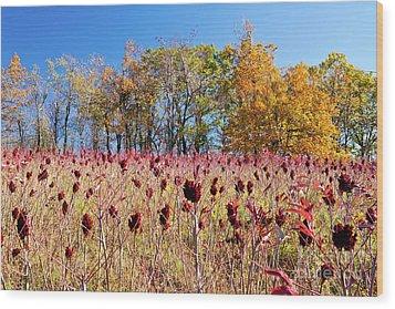Deadly Beauty In The Blue Ridge Wood Print by Dan Carmichael